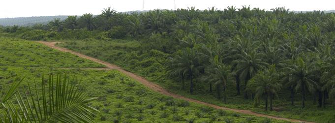 Plantation Gopdc