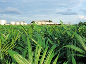View on Oil Palm Nursery and Factory.jpg